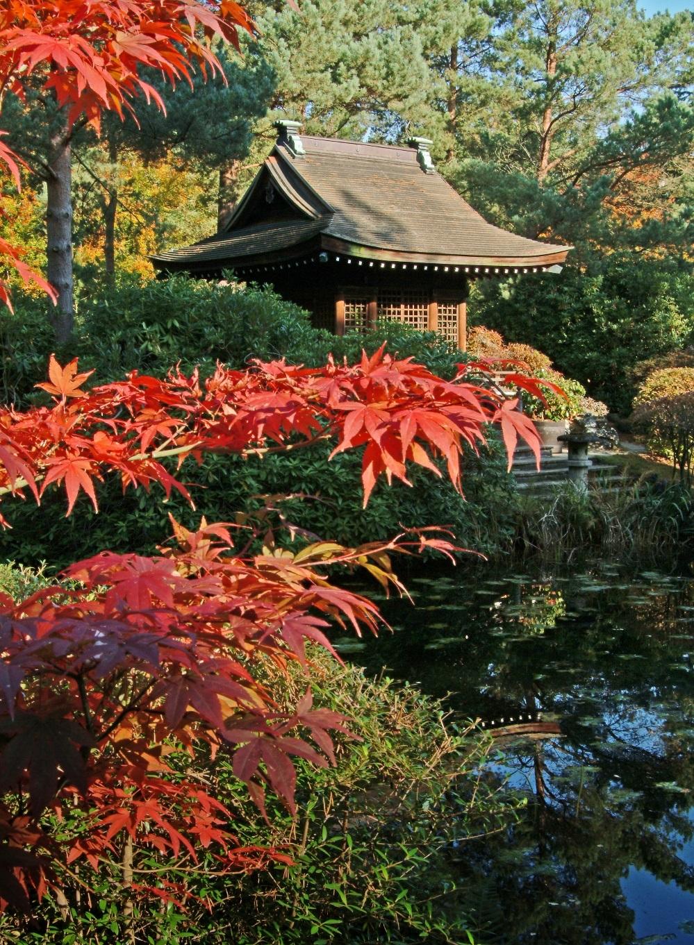 Tatton Park in autumn